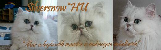 Silversnow*HU Persian Cats